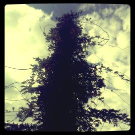 Guerillapflanze