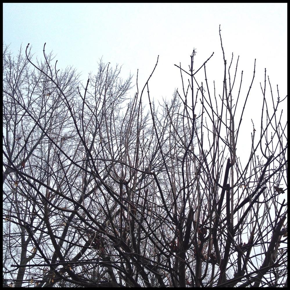 Foto 05.12.14 15 30 49