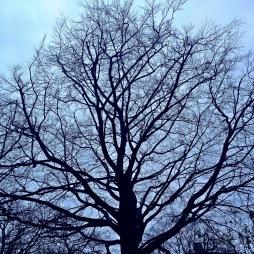 Bäume im Dezember