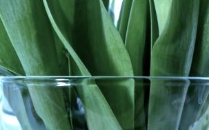 Tulpenblätter in Vase