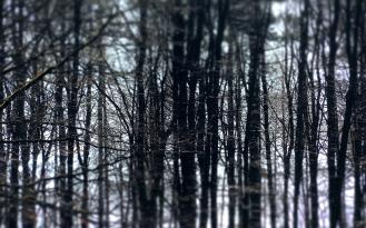 Endlos-Bäume