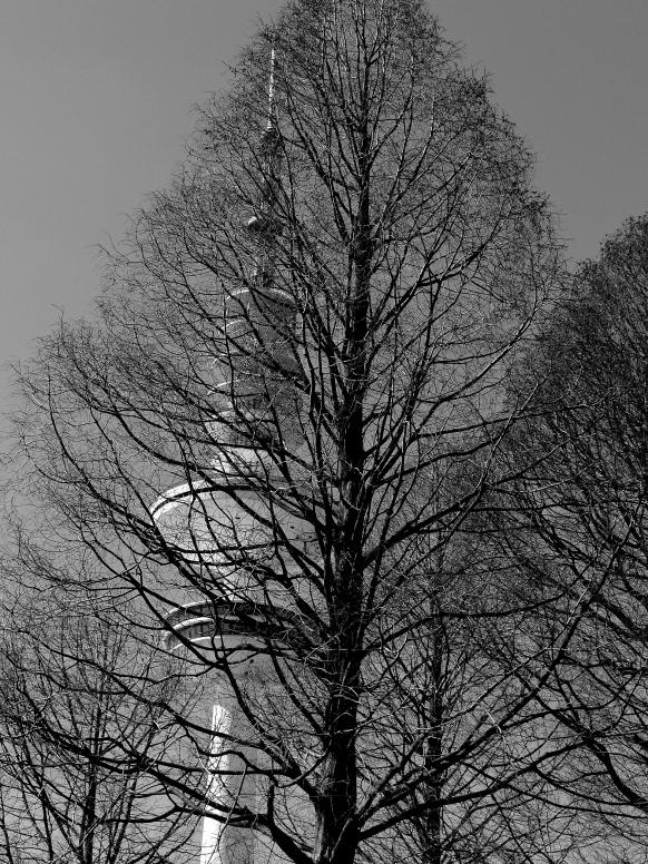 Fernsehturm liebt Baum