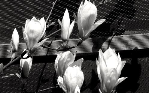 Blüte über Blüte