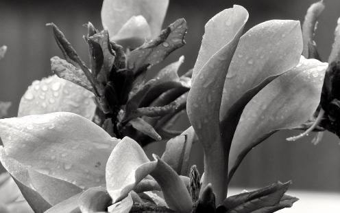 Benetzte Blüten
