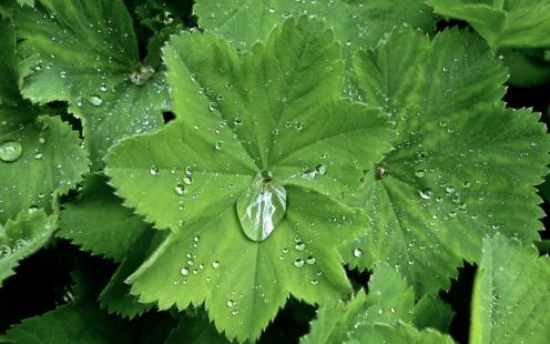 Blättersee