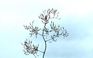 Einsame Himmelspflanze