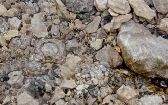 Blubbernde Steine