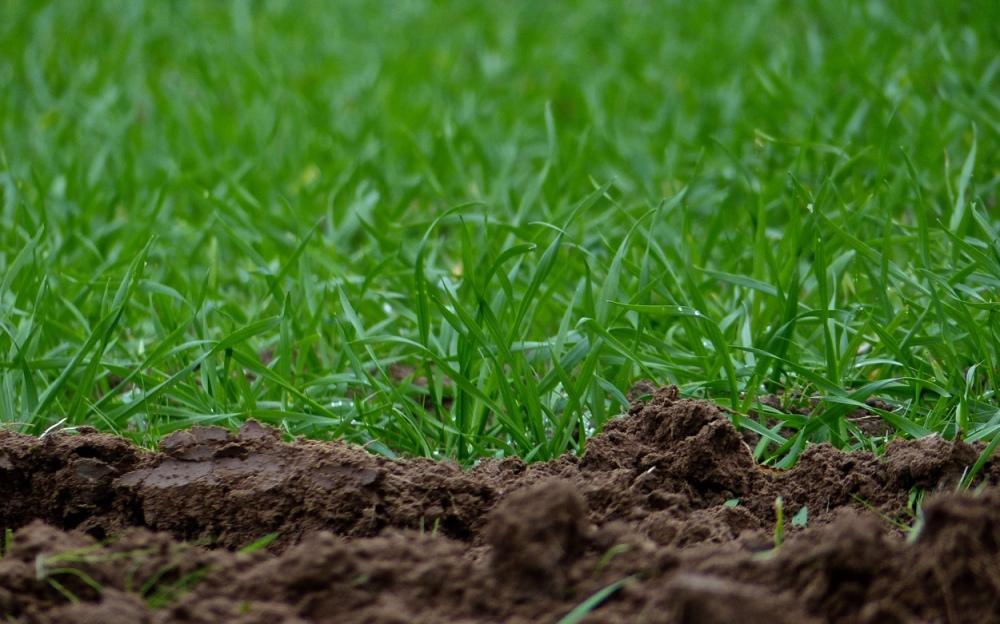Gras an Erde