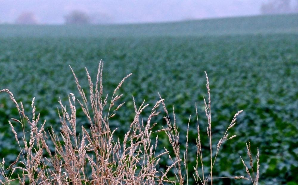 Gras vor Feld
