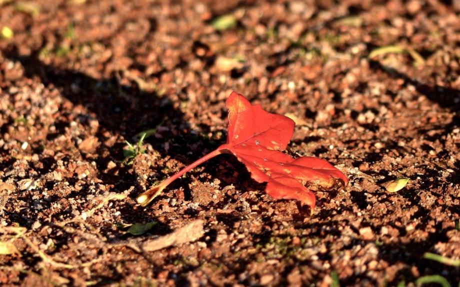 Herbstblatt rot
