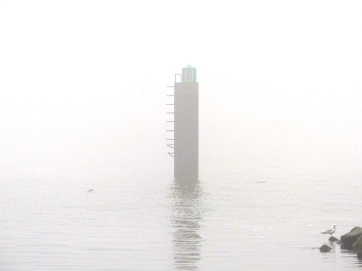 Möwe am Nebelmeer