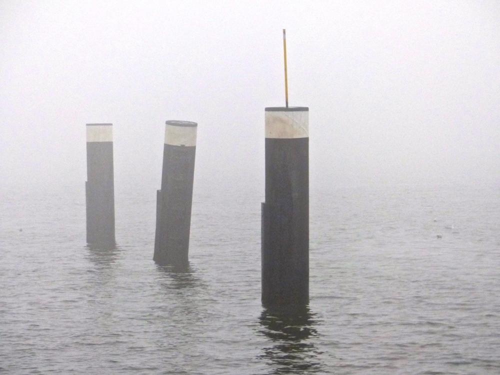 Nebelholz