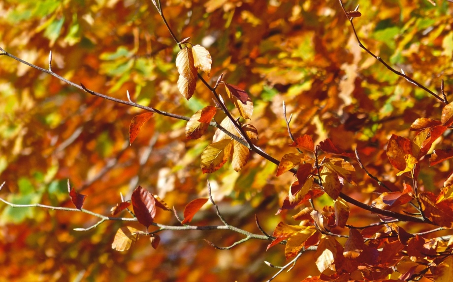 Orange Blätter