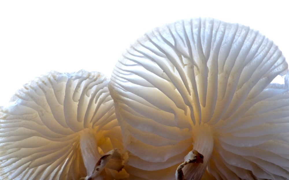 Pilzrausch