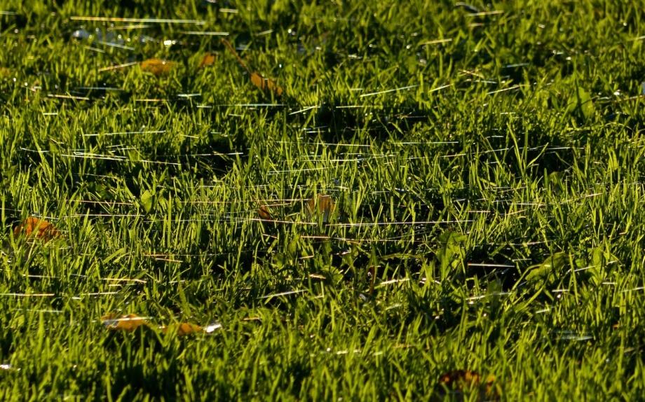 Spinnenwiese