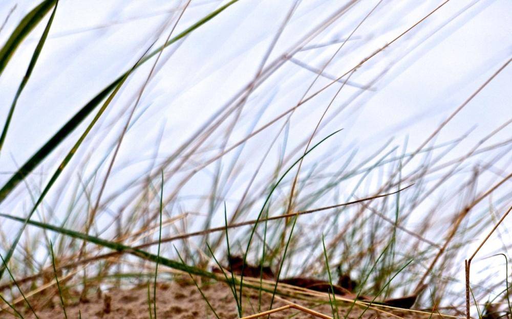 Windrauschen
