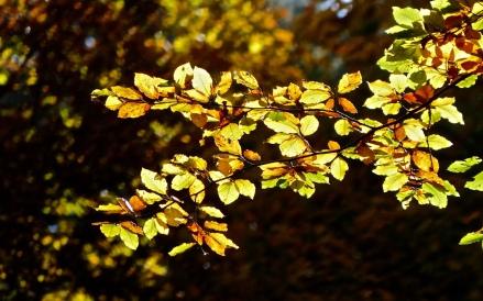Sonnenblätter