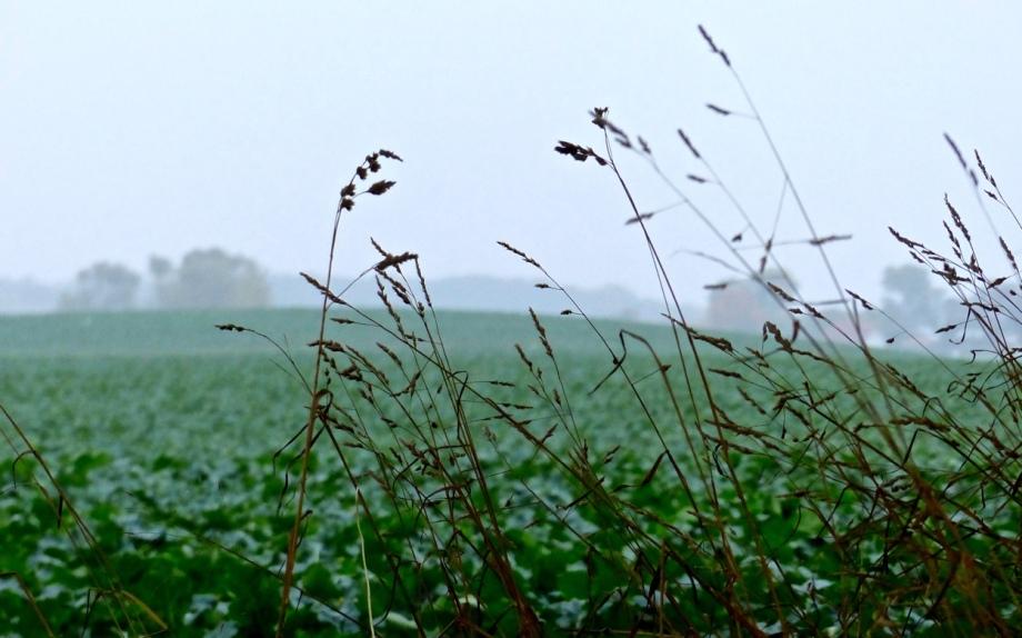 Gras vor Acker