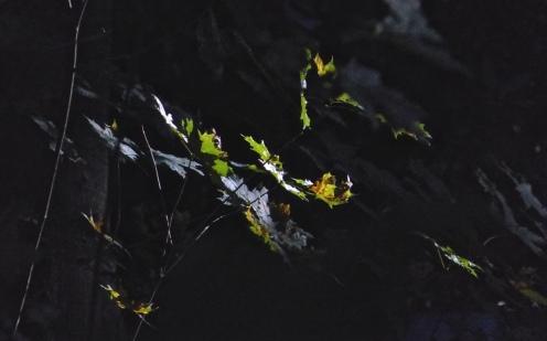 Lichtblätter
