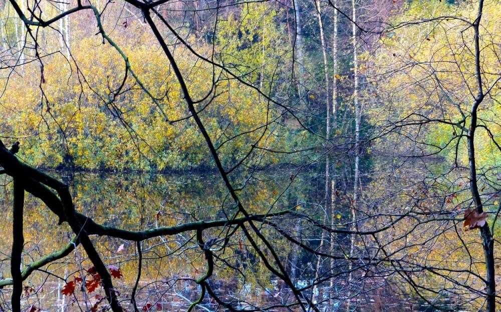 Waldspiegel