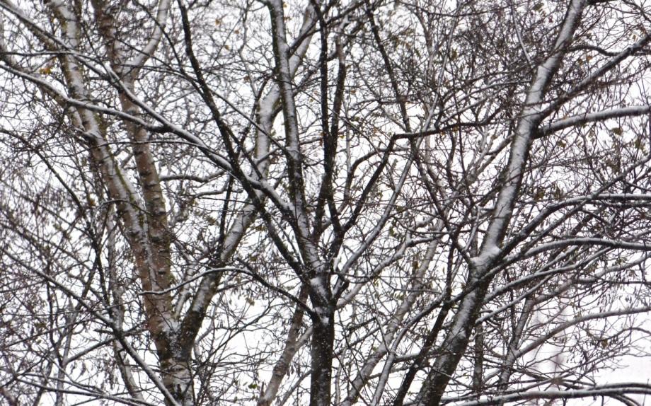 Weiss im Wald
