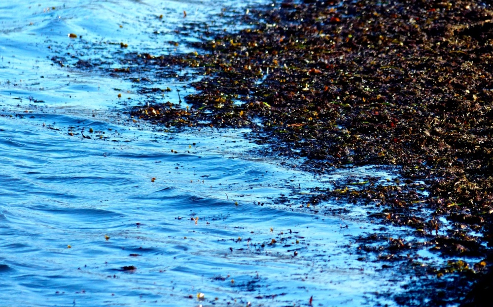 Strandschmodder