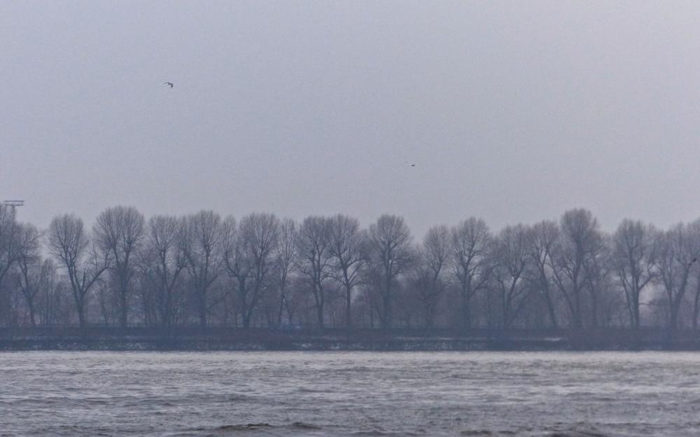 Winterelbe 5