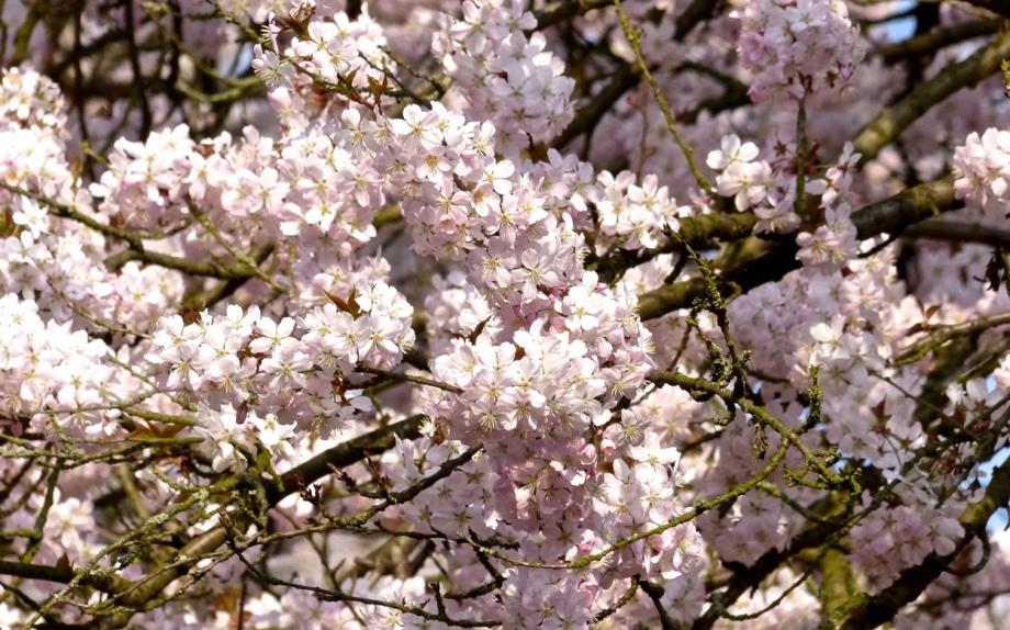 Blütenrausch 3