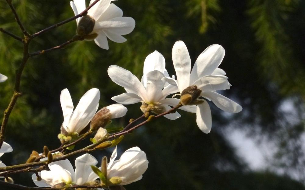 Blütenrausch 5