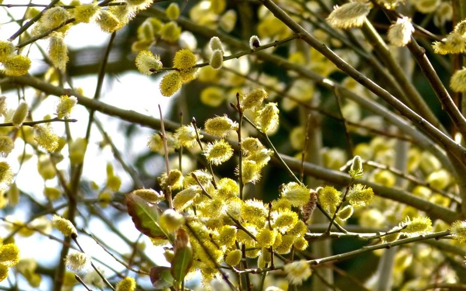Blütenrausch 7