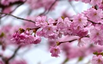 Blütenrausch in Rosa
