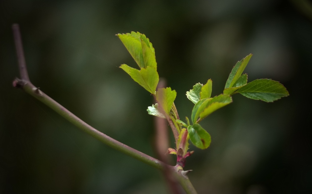 Frühlingsseufzer 6