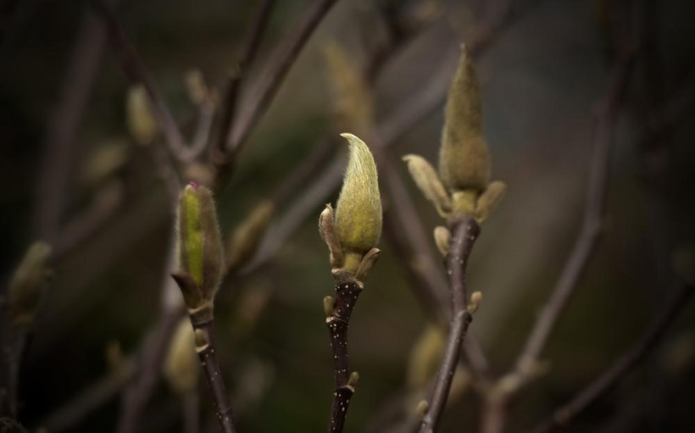 Frühlingsseufzer 9