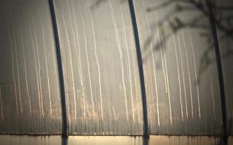 Regenwasserspiegel