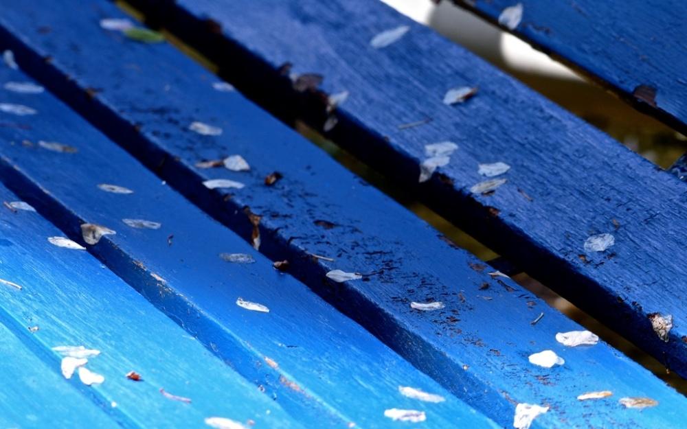 Blau 2