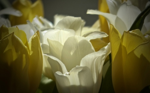Blütenverbund