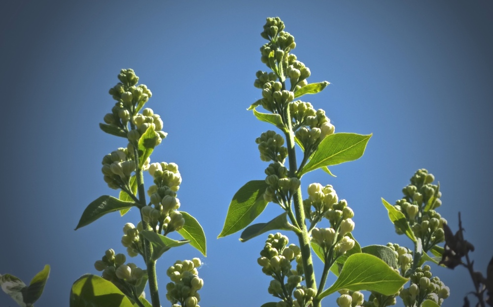 Blüten & Blätter 5