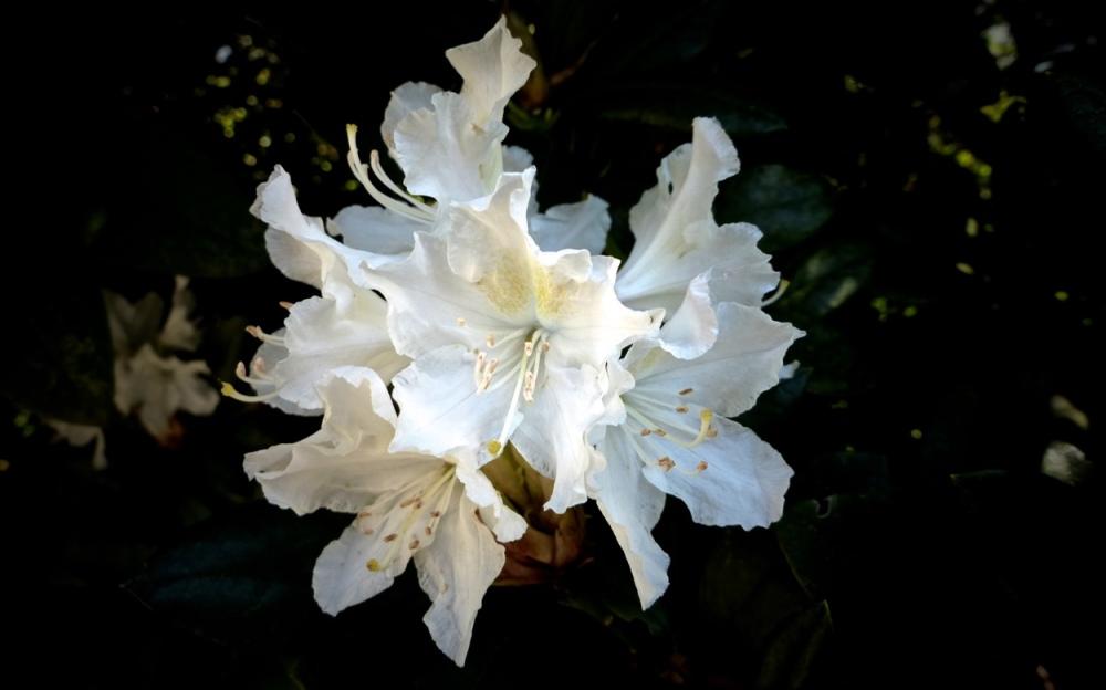 Blüten & Blätter 6