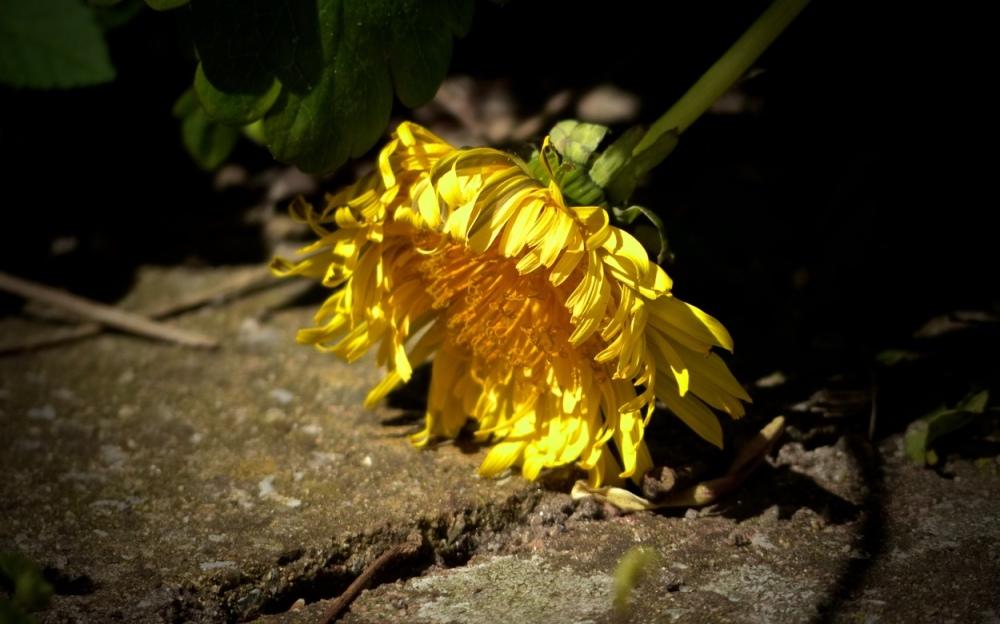 Blüten & Blätter 7