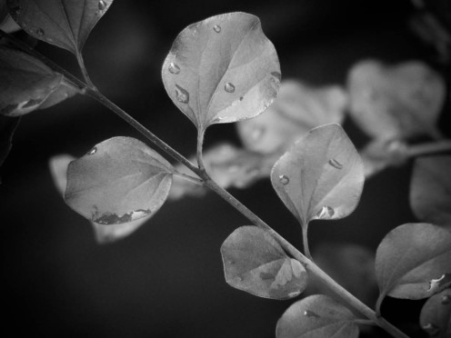 Blätter im Regen