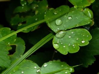 Sommerregen 2