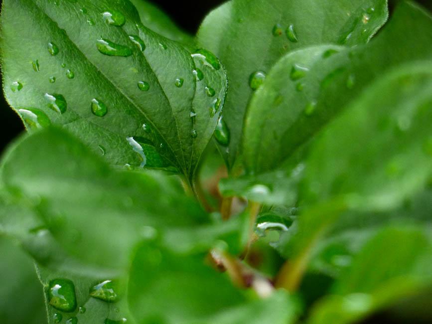 Sommerregen 3