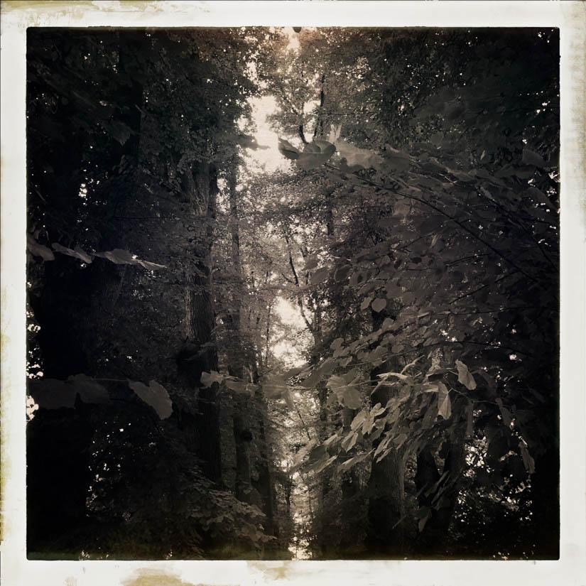 Licht bewaldet 1