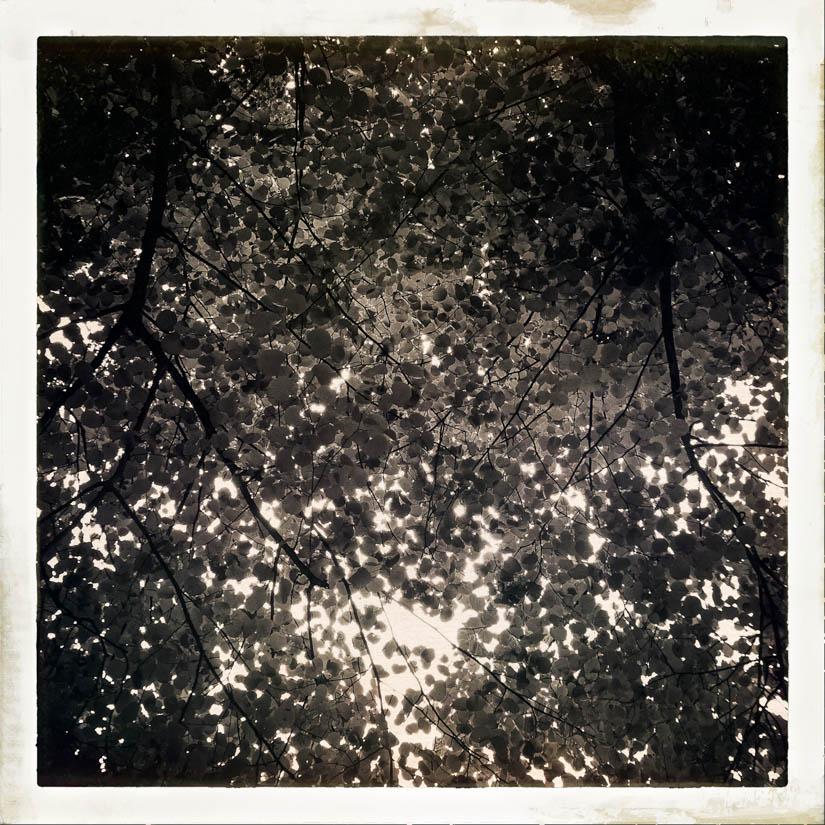 Licht bewaldet 2