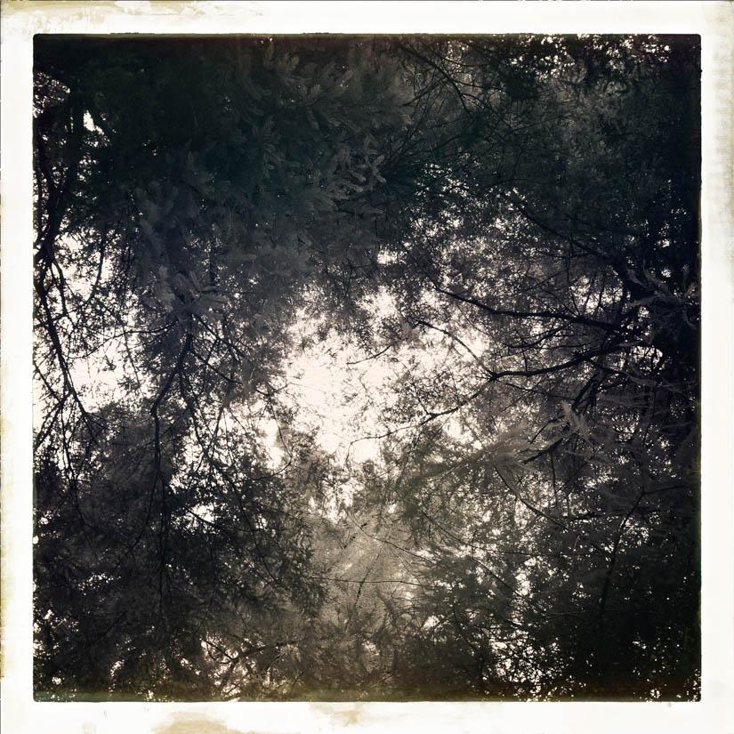 Licht bewaldet 7