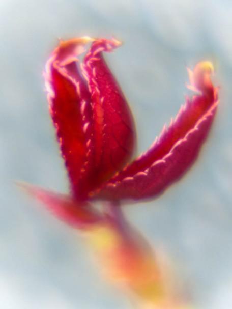 Blumenmalerei