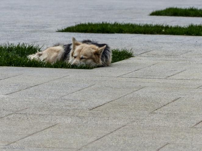 Hundeschlaf