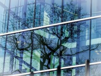 Baumspiegel