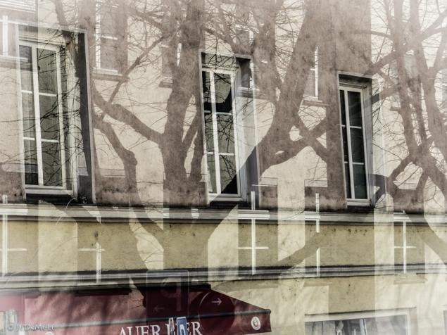 Bäume dazwischen