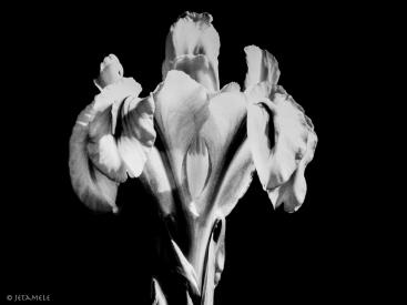 Blütenköpfe